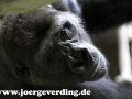 tiere-848