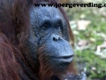 tiere-857