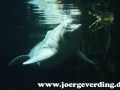 tiere-702