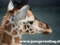 tiere-395