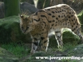 tiere-49