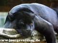 tiere-610