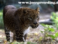 tiere-751
