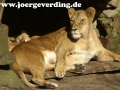 tiere-835