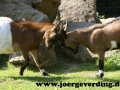 tiere-794
