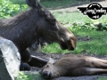 tiere-986