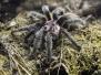 Spinne, Käfer, ...