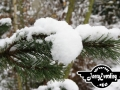winter-102
