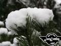 winter-103