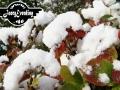 winter-105