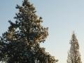 winter-107