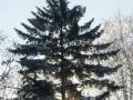 winter-125