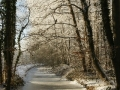 winter-135