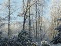 winter-149
