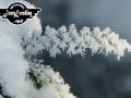winter-165