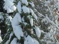 winter-240