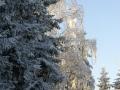 winter-39