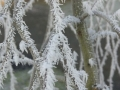 winter-50