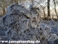 winter-73