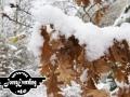 winter-99