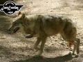 tiere-1060