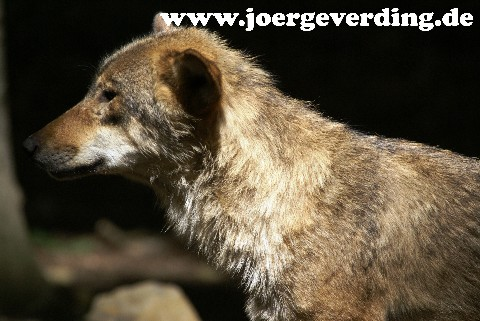 tiere-623