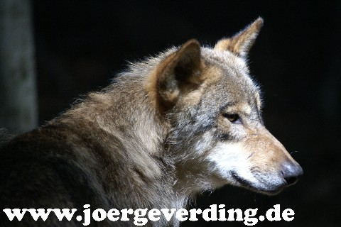 tiere-624