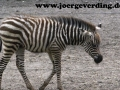 tiere-483